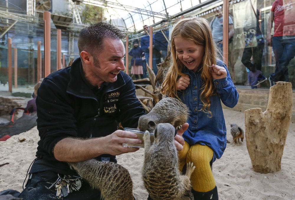 Zookeeper with Meerkat on his shoulder